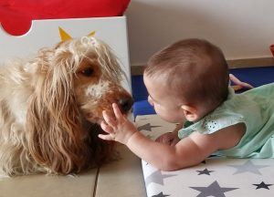 כלב ותינוק בבית