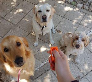 כלבים וקליקר