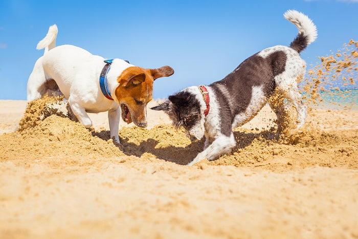 כלבים תחת השמש