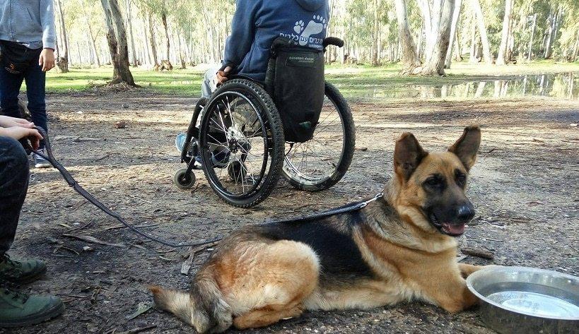 שבתאי ניצחון טיפול בעזרת כלבים