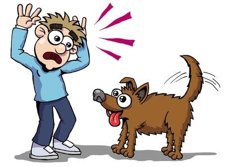 פחד מכלבים