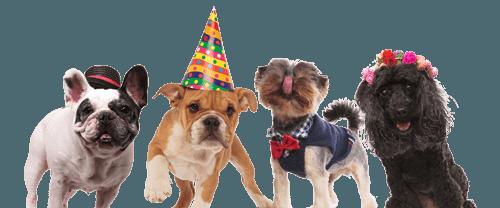יומולדת עם כלבים