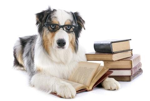 מילון לשפה הכלבית