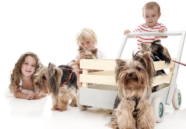 לימודי כלבנות טיפולית